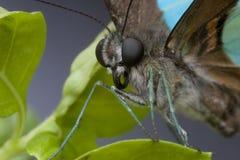 Vlinder met een roze en purpere achtergrond Royalty-vrije Stock Afbeelding