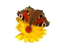 Vlinder met het knippen van weg Stock Afbeeldingen