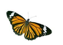 Vlinder met het knippen van weg Stock Afbeelding