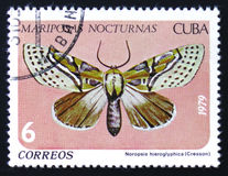 vlinder met hieroglyphica van inschrijvingsnoropsis, reeks, circa 1979 Royalty-vrije Stock Foto