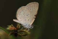 Vlinder met insect op de bloem Stock Fotografie