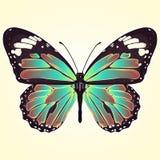Vlinder met kleurrijke hierboven vleugels, mening van, die op lichtgele achtergrond worden geïsoleerd Vectorillustratie, banner,  vector illustratie