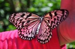 Vlinder met mensen Stock Afbeeldingen