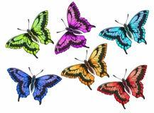 Vlinder met open vleugels vector illustratie