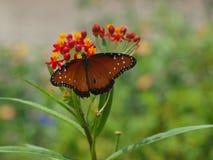 Vlinder met Opene-Vleugels Stock Foto