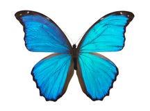 Vlinder Morpho Royalty-vrije Stock Foto's
