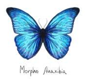 Vlinder Morpho Anaxibia. De imitatie van de waterverf. Royalty-vrije Stock Foto's