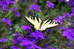 Vlinder onder purpere bloemen Royalty-vrije Stock Foto's