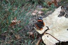 Vlinder op Blad Royalty-vrije Stock Afbeelding