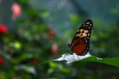 Vlinder op Blad Royalty-vrije Stock Afbeeldingen