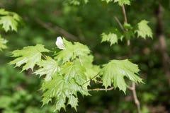 Vlinder op bladachtergrond stock foto