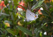 Vlinder op bladerenbloem royalty-vrije stock fotografie