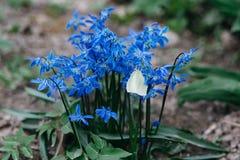 Vlinder op blauwe bloemen in het zonlicht stock afbeeldingen