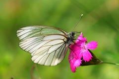 Vlinder op bloem royalty-vrije stock afbeelding