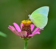 Vlinder op bloem Stock Afbeeldingen