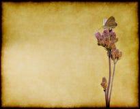 Vlinder op bloem royalty-vrije illustratie