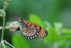 vlinder op bloem in aard Royalty-vrije Stock Foto's