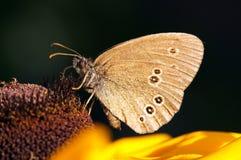 Vlinder op bloem in de tuin royalty-vrije stock fotografie