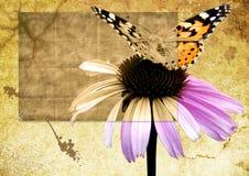 Vlinder op bloem grunge Stock Afbeelding