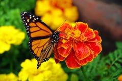 Vlinder op bloem - II stock fotografie