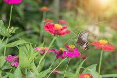 Vlinder op bloem in tropische tuin Royalty-vrije Stock Fotografie