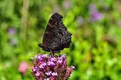 Vlinder op bloem in tuin Stock Foto