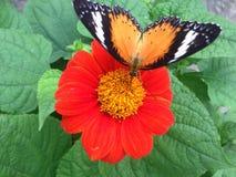 Vlinder op bloem in tuin stock foto's