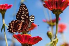 Vlinder op bloem in Zuid-Afrika stock afbeelding