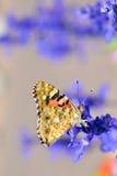 Vlinder op bloemen Stock Afbeelding