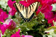 Vlinder op bloemen Stock Fotografie