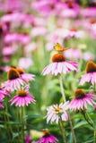Vlinder op bloemen Royalty-vrije Stock Foto's