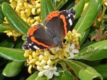 Vlinder op bloemen Royalty-vrije Stock Foto