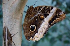 Vlinder op boom Royalty-vrije Stock Foto's