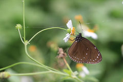 Vlinder op de bloeiende bloem Stock Fotografie
