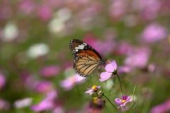 Vlinder op de bloem stock foto
