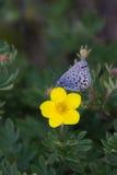 Vlinder op de bloem stock afbeeldingen