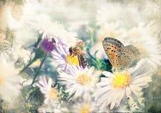 Vlinder op de bloem Royalty-vrije Stock Foto's