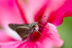 Vlinder op de bloem royalty-vrije stock foto
