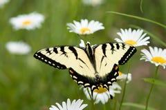 Vlinder op de bloem stock foto's