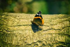 Vlinder op de boomstam van de boom Horizontale plaats Stock Foto