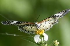 Vlinder op de groene achtergrond Royalty-vrije Stock Fotografie