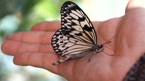 Vlinder op de hand stock video
