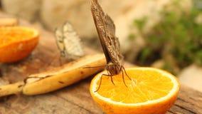 Vlinder op de helft-sinaasappel Stock Foto