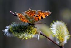 Vlinder op de lentebloemen Stock Afbeelding