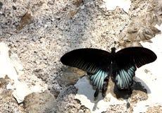 Vlinder op de muur Royalty-vrije Stock Foto