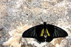 Vlinder op de muur Royalty-vrije Stock Afbeeldingen