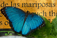Vlinder op de oude achtergrond Stock Afbeeldingen