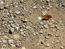 Vlinder op de steen royalty-vrije stock afbeeldingen