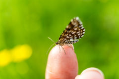 Vlinder op de Vinger Stock Foto