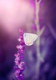 Vlinder op de wilde bloem Royalty-vrije Stock Afbeeldingen